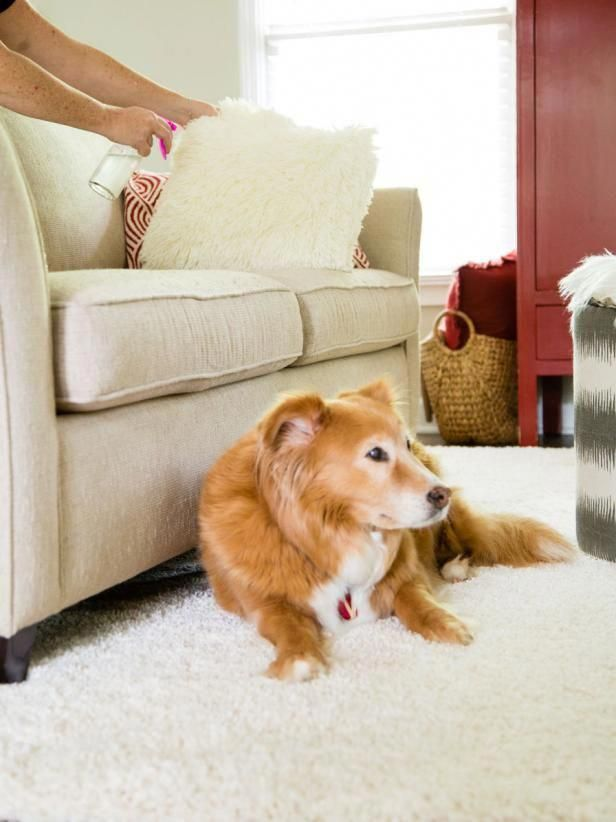 natural sofa deodorizer 8 diy all room create your own deodorizing spritz for use on rugs and soft furnishings it where pets love to laze around
