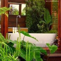 Растения, подходящие для ванной комнаты фото