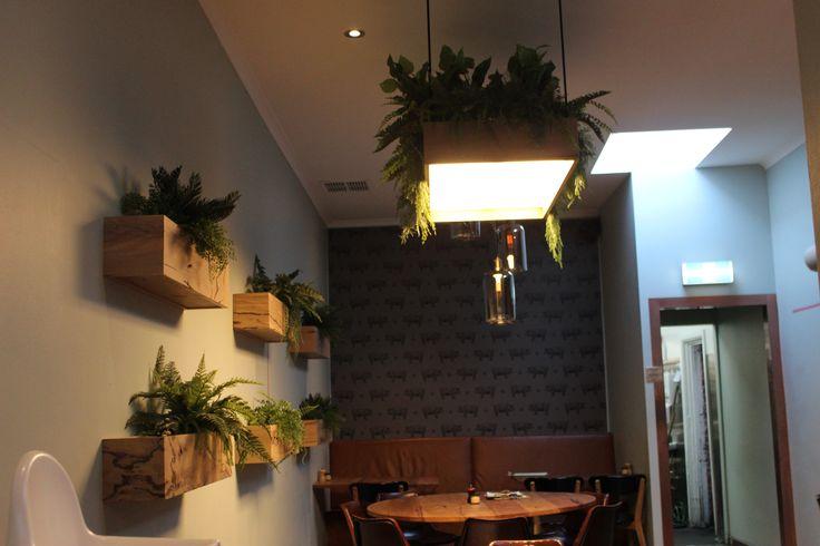 Cafe plants Parker Road