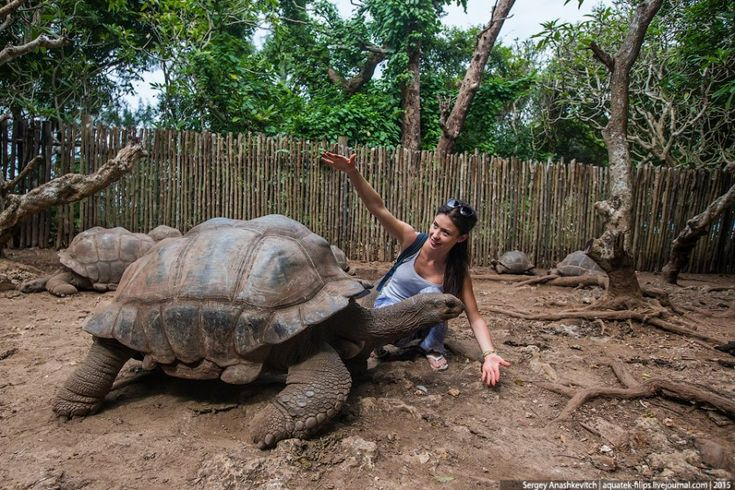 14 Гигантские сейшельские черепахи в мини-заповеднике