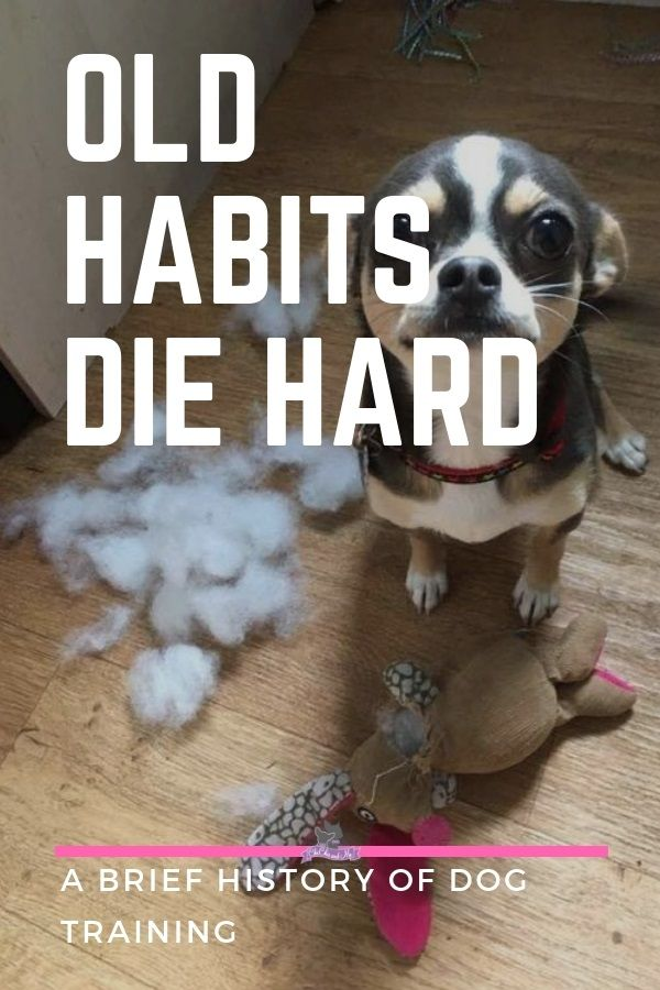 Title A Brief History Of Dog Training Cute Chihuahua Dogs