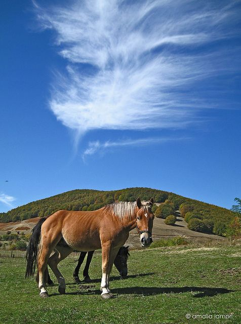 This is my Greece | Horses in Nymfaio  a village in Florina regional unit, West Macedonia
