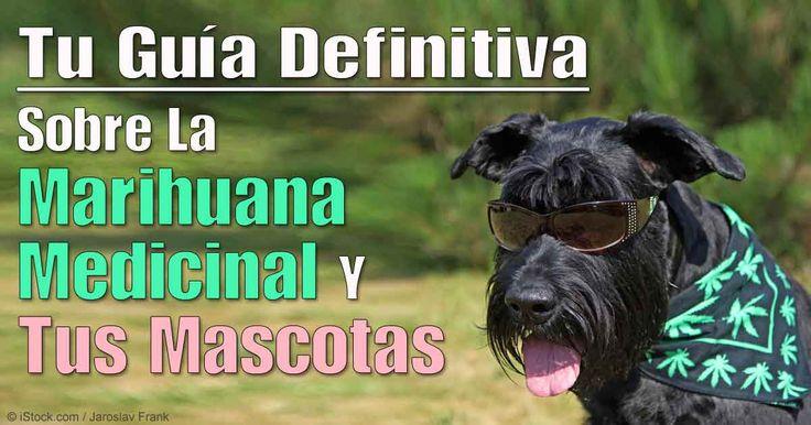 El libro del Dr. Silver está dirigido a los dueños de mascotas que quieren entender más sobre los beneficios y riesgos del cannabis y sus cuestiones legales. http://mascotas.mercola.com/sitios/mascotas/archivo/2016/02/21/cannabis-para-mascotas.aspx