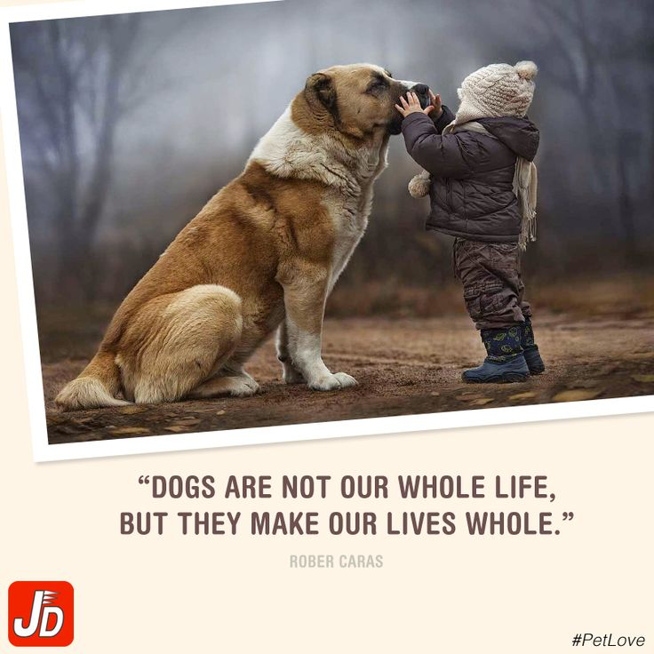 Improve your dog's life with us.  Download our app & shop for pet's