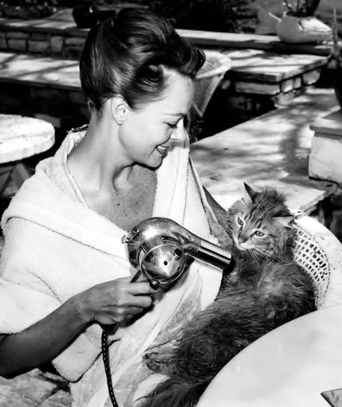 June Lockhart blow drys her pussy cat. °