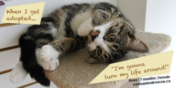 Thoughts from our rescue kittens.  oasisanimalrescue.ca