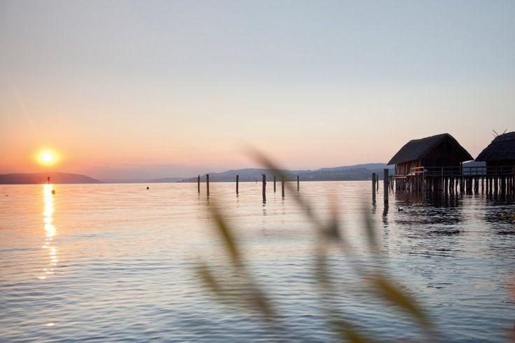 Ein Winzer am Bodensee