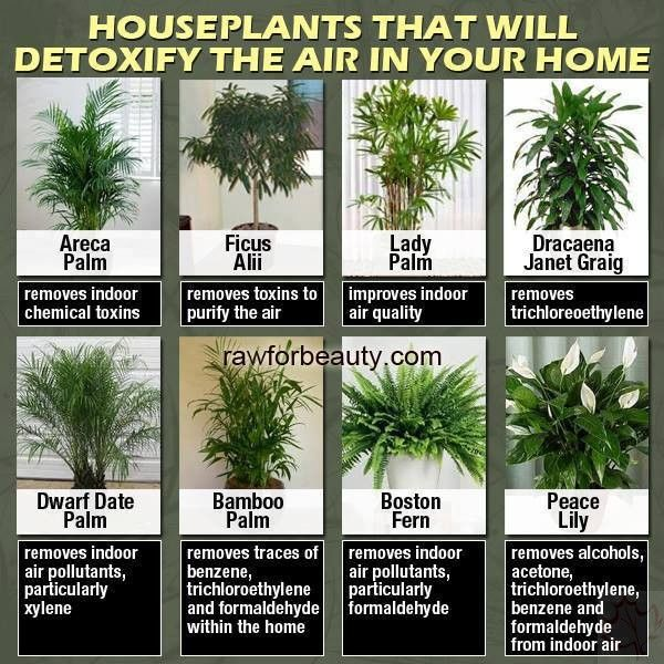 houseplants that will detoxify the air in your home!