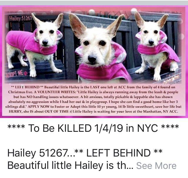 Hailey Pulled By Peyton S Place Animal Rescue 01 04 19 To Die 01 04 19 Nyc Dogs Dogs Dog Safe