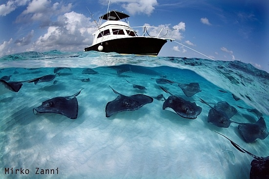 Red Sea: Marines Photography, 2010 Marines, Underwater People, Pictures, Crystals Clear, Naturebeautyamaz
