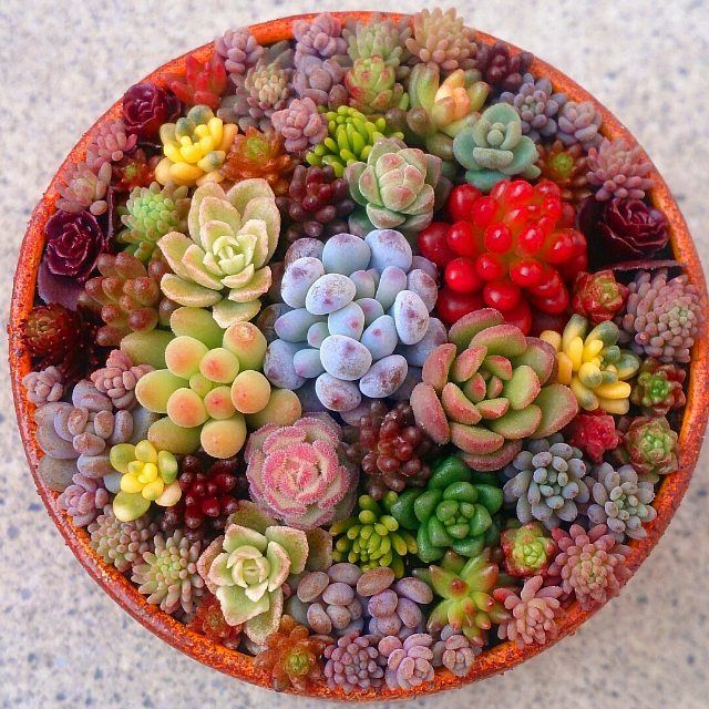 Beautiful succulents!
