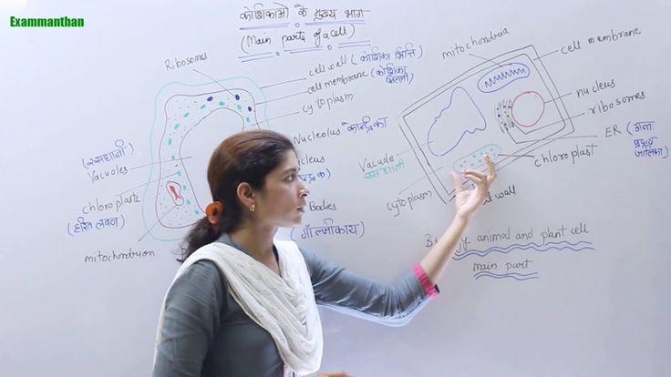 GK Biology - सामान्य ज्ञान जीव विज्ञान कोशिका (CELL) For SSC Railway & A...