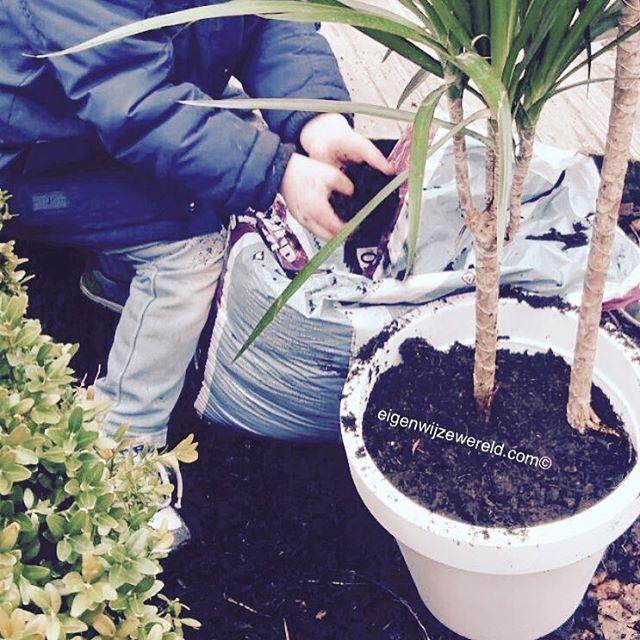 Reggio Emilia inspiratie 17 vind-ik-leuks, 1 reacties - Gwen (@gwen.eigenwijzewereld) op Instagram: '🍃Heerlijk toch! Samen planten potten. Goede oefening voor de motoriek en heerlijk om te ervaren.…'