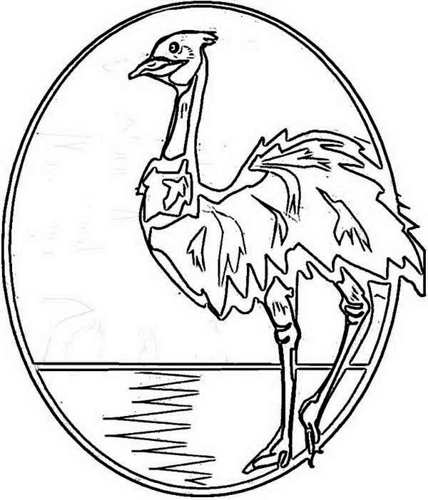 Australia Day An Illustration Of Australia Emu For Australia