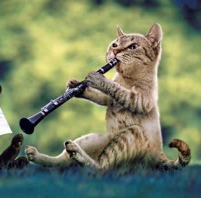 Gato Tocando El Clarinete M 250 Sica Gatos Clarinete Musica