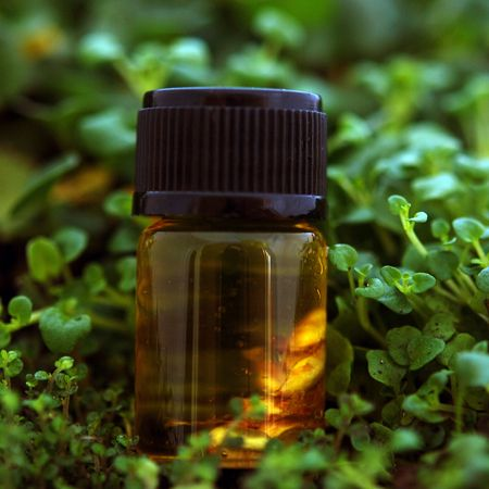 5 Tips For a Mosquito-Free Summer: Citronella Grass, Essential Oil, Free Summer, Carrier Oil, Oil Candles, Lemon Balm, Mosquitoes Fre Summer, Mosquitoes Repellent, Mosquitoes Free