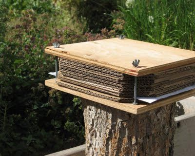 Herb Press - DIY: Create a Plant Herbarium