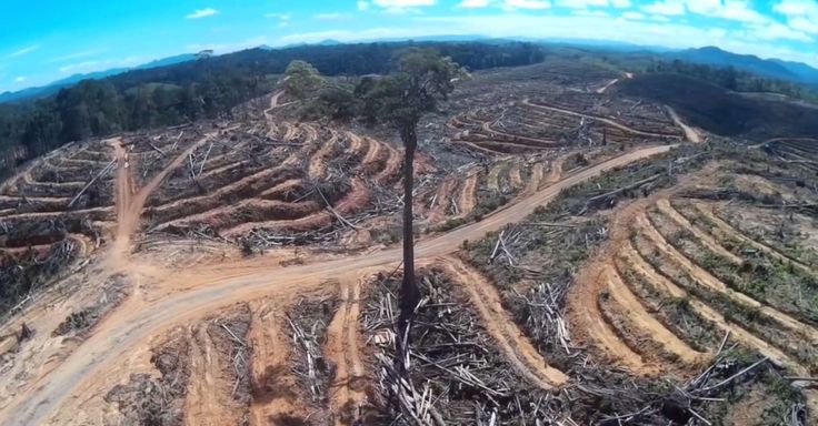 You Won't Believe These Images of Rainforest Destruction Captured By A Drone
