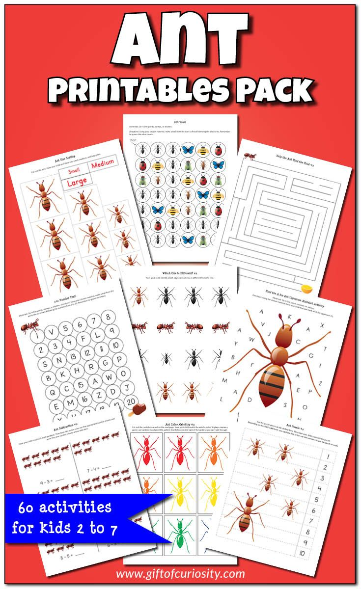 Ant Printables Pack with 60 ant-themed worksheets and activities for kids ages 2-7. This is a great resource for a preschool or kindergarten insect unit! || Gift of Curiosity
