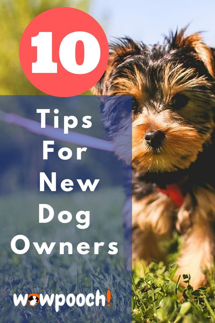 how to take care of new puppies
