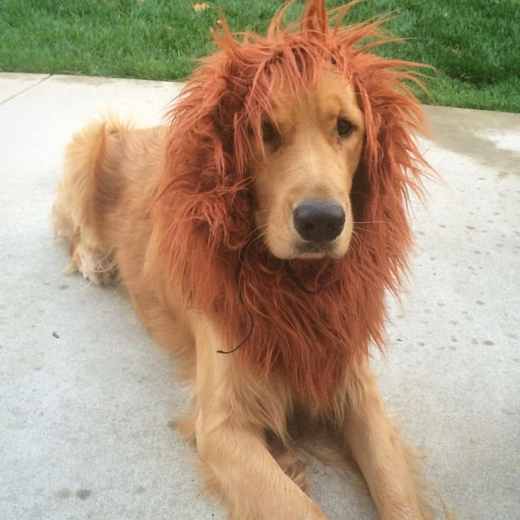 19 Best Pet Halloween Costumes Images On Pinterest