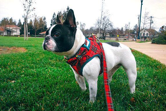Plaid Dog Harness Leash Collar Set Tartan Dog Harness Leash Dog