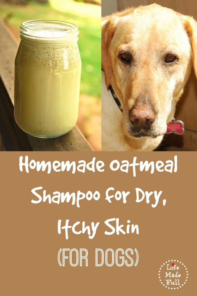 Help Relieve Pet's Dry, Itchy Skin w/ Homemade Oatmeal Shampoo from Shanti at LifeMadeFull.com