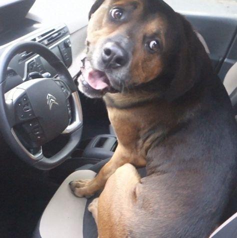 Bumper rijdt auto