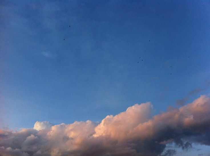Cielo-Aves-Nubes rosa