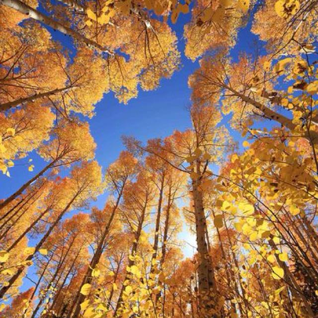 Fall Trees, Utah