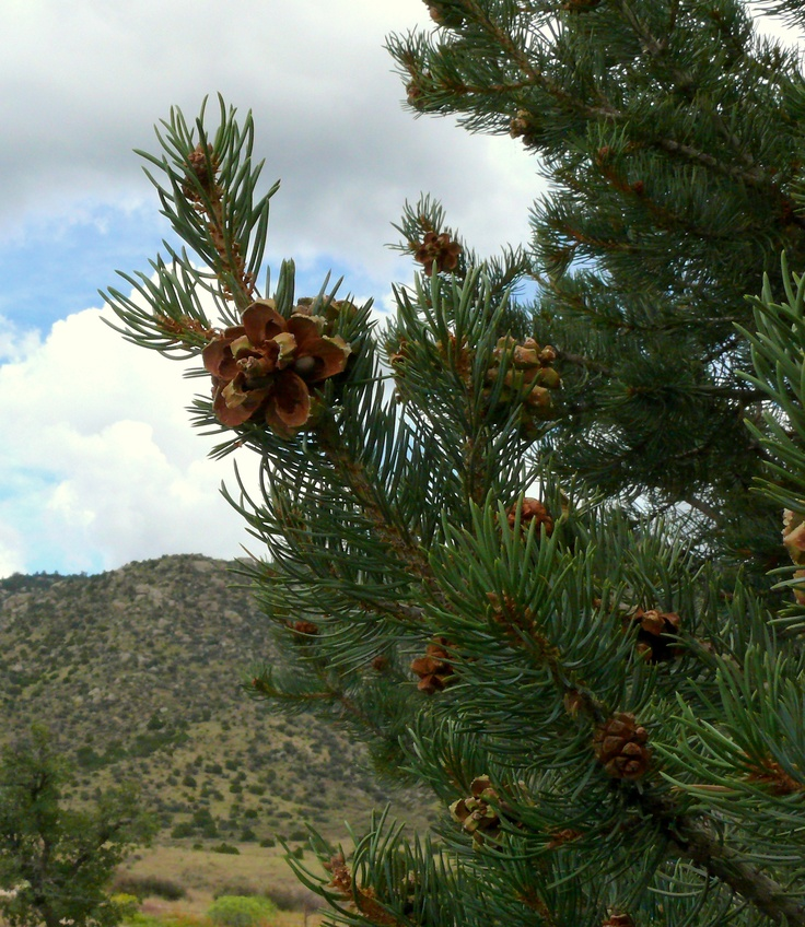588 best images about land of enchantment    new mexico on pinterest