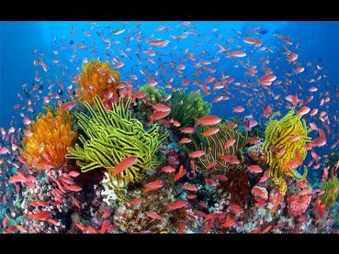 Austraila's Great Barrier Reef - National Geographic (With Subtitles) - YouTube (51:42m)