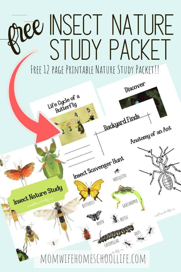 Insects Facebook Twitter Pinterest Why Study Insects In Your Homeschool 1 Because Your Sons Will Love It 2 They Are Everywhere In 2020 Curriculum Youtube School