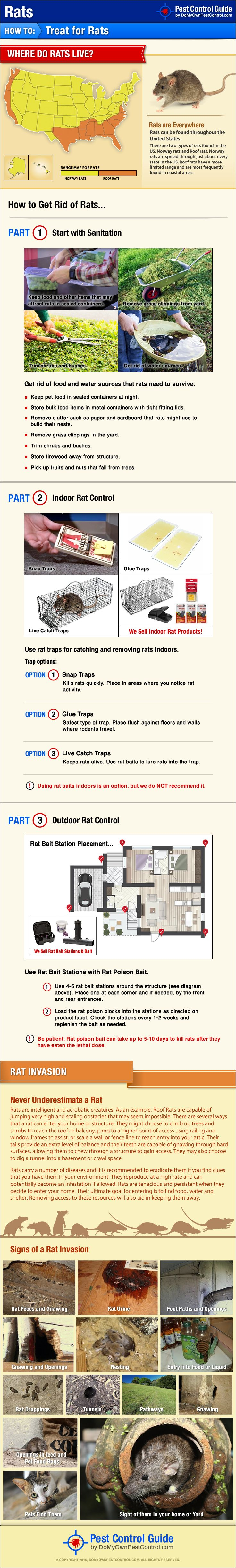 best 25 getting rid of rats ideas on pinterest getting rid of