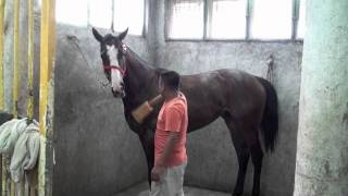 ENJO & horses, via YouTube.