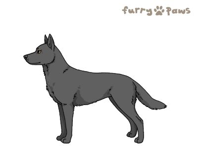 Furry Paws // UCH Kip's Minerva McGonagall [3STM 1.577] 11.1 547's Kennel