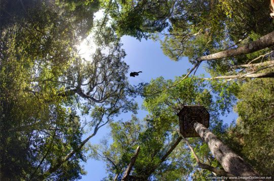 Tree top canopy tour, South Africa