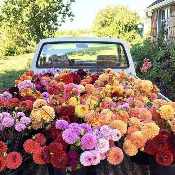 Better Homes & Gardens StyleMaker Event Planting flowers