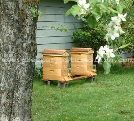 Next year we are installing a beehive
