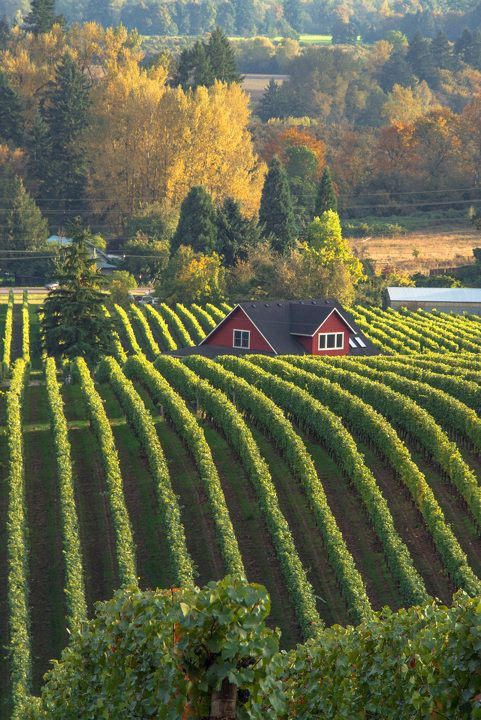 Sokol Blosser Winery in Dayton, Oregon; photo by .Larry Andreasen