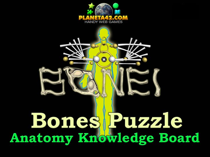bones puzzle: interactive knowledge board, used to explore the, Skeleton