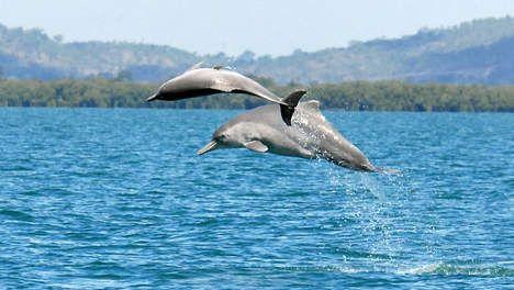 'Dolfijnenjacht Salomonseilanden grootste ter wereld' - Dierenwelzijn…