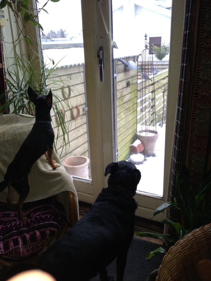 Balto and dino are looking out to se whats happening in the garden!