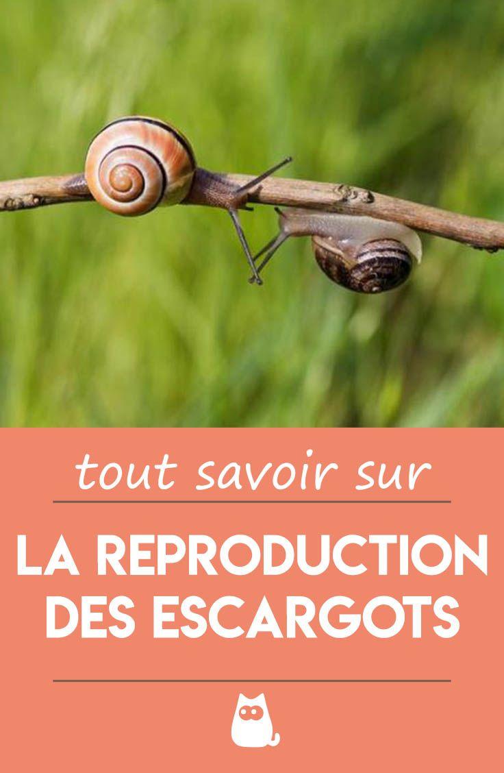 Qu'est Ce Qui Attire Les Escargots : qu'est, attire, escargots, Épinglé, Insectes