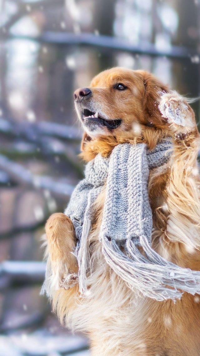 Dog Cute Animals Snow Winter 4k Vertical Mascotas Animales