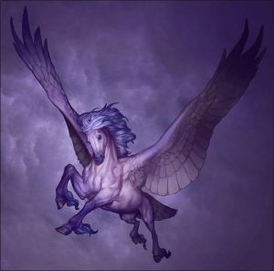 YMC - Pegasus