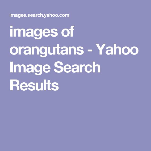 images of orangutans - Yahoo Image Search Results
