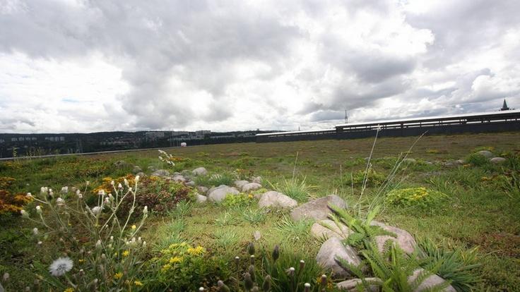 Fra bakken synes det overhodet ikke, det 28000 kvadratmeter store grøntanlegget på taket til Veolias miljøanlegg. Taket erstatter manglende naturlig drenering av regnvann til grunnen. Plantene tar opp til 50 prosent av vannet og forsinker avrenningen av resten.