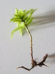 QUIZLET: Metsän kasvit kuvina