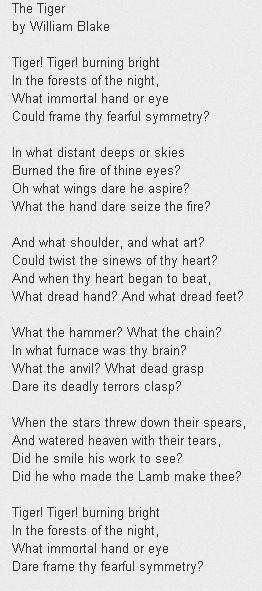The Tiger. William Blake  #poetry http://annabelchaffer.com/